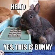 50+ Funny rabbit jokes for kids 2