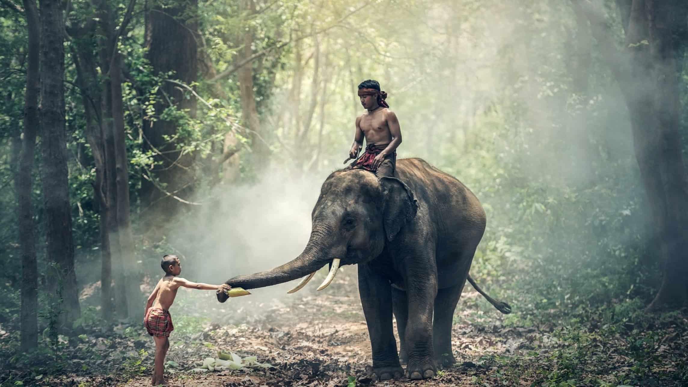funny elephant jokes