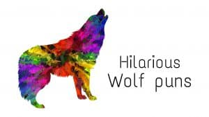 Hilarious Wolf puns to make you giggle out loud