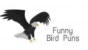 The Absolutely Best Birds Puns Ever