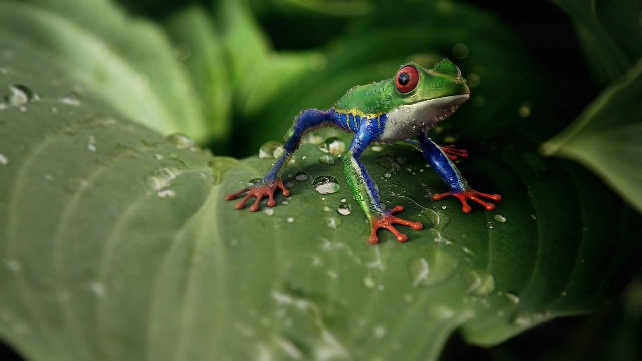Hilarious frog puns