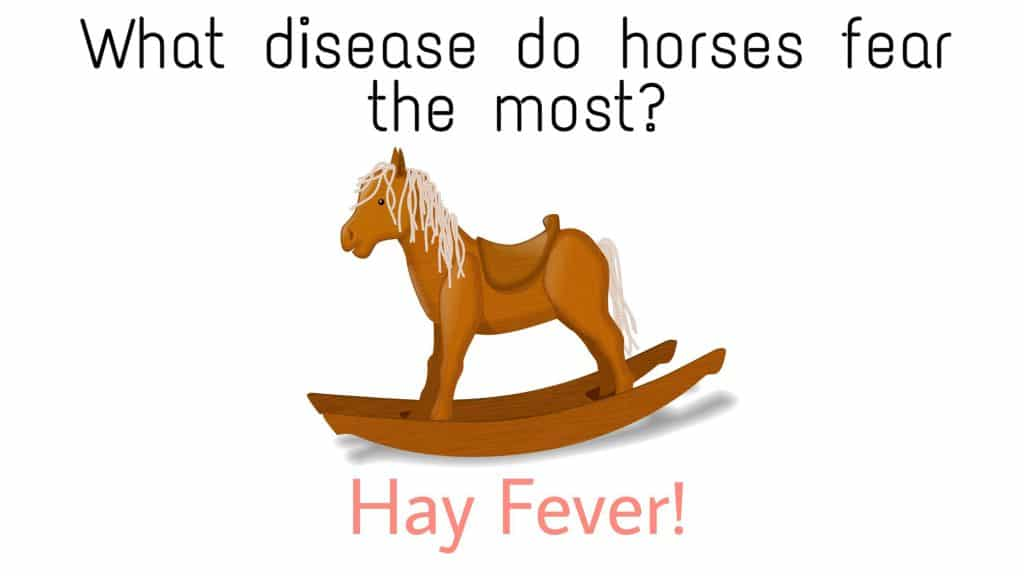 Beat funny horse puns