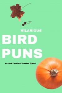 60+ Birds Puns That Will Ruffle Your Feathers.