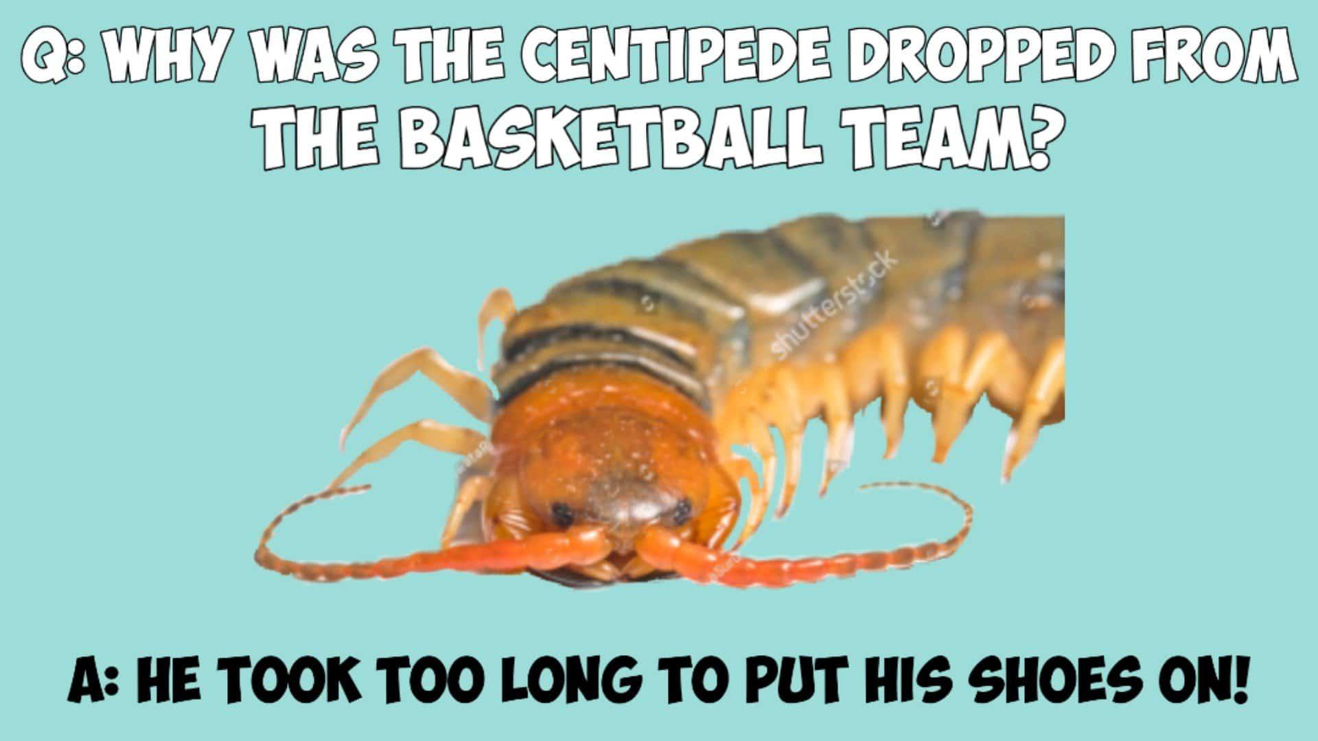 Best funny bug puns