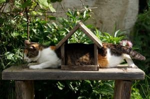 Read more about the article 7 Hilarious Things Your Cat Does