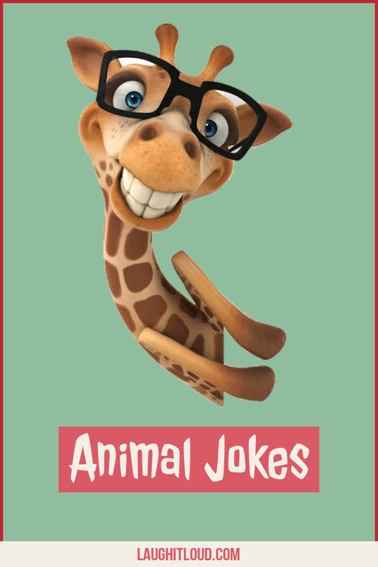 110+ Animal jokes That Will Spark Laughter in You