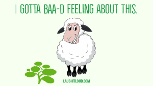 55 Hilarious Sheep puns you wolly love